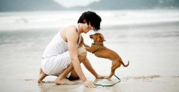 Camping mit Hund – Tipps zur Reise mit dem Hund